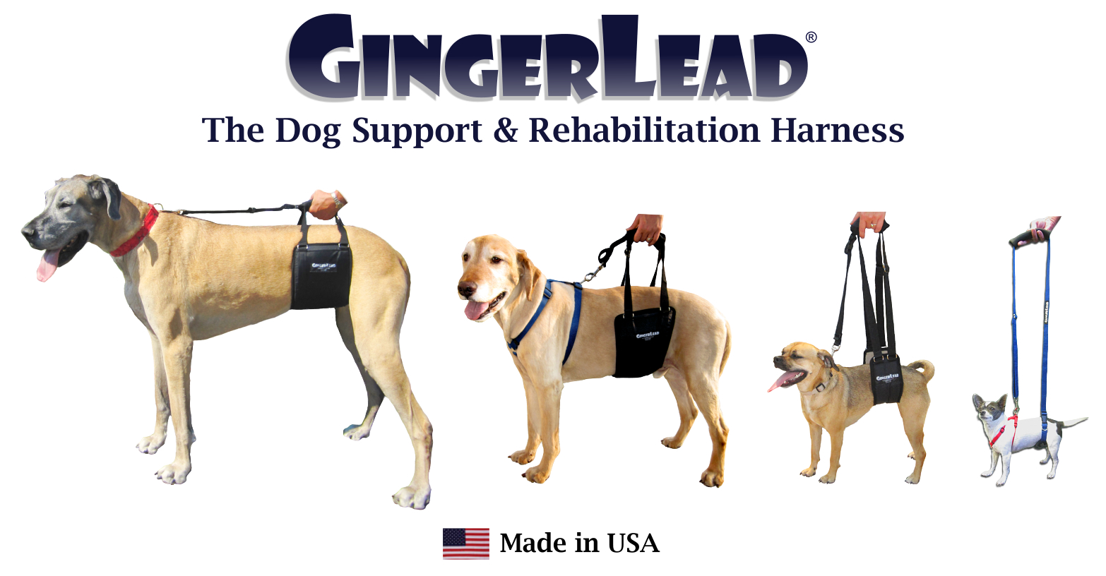 gentle leader harness instructions